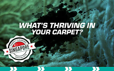 What's Thriving in Your Carpet?