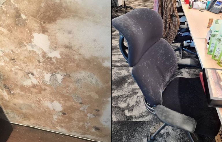 Damp and stained areas are usually prime locations for mould growth