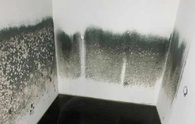 Mold Infested Area | Wall and Floor