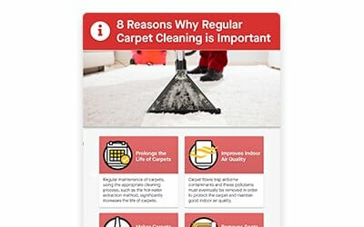 8 Reasons Why Regular Carpet Cleaning is Important